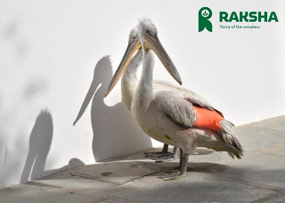 Injured-Bird-Jaipur-1.jpg