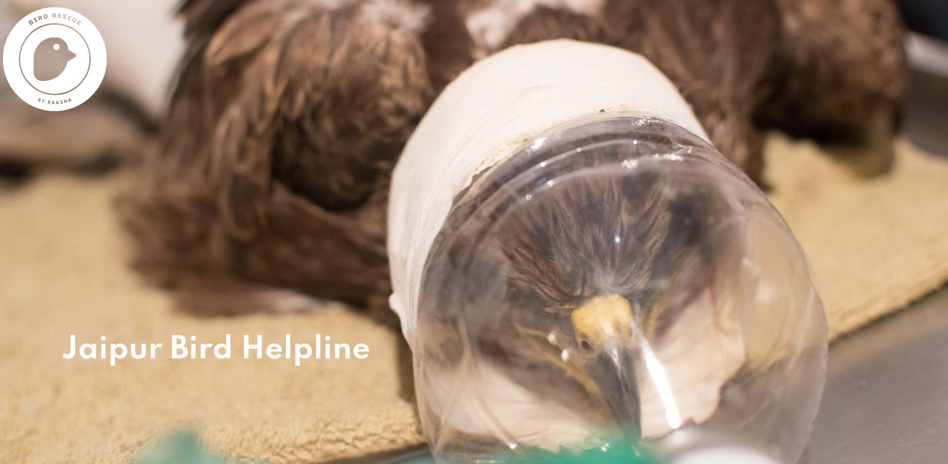 Jaipur-Bird-Helpline-2.jpg