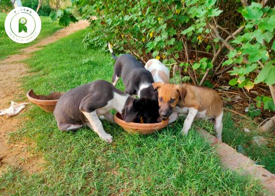 Lockdown-Animal-Feeding.jpg